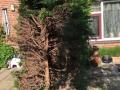 Prunuslaan heg1