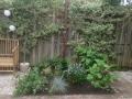Prunuslaan aanplanting3